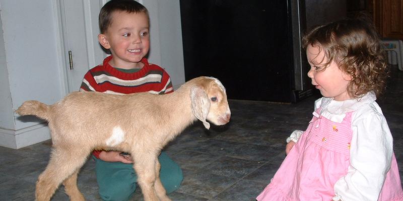 Baby Nubian Goat Kid